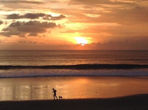 jp, dog, bali sunset